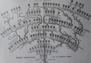 arbre généalogique des Borel